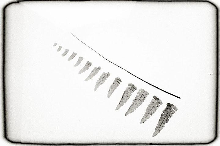 """Online Workshop """"Schwarzweißfotografie – digital! Monochrome Welten"""": Bild"""