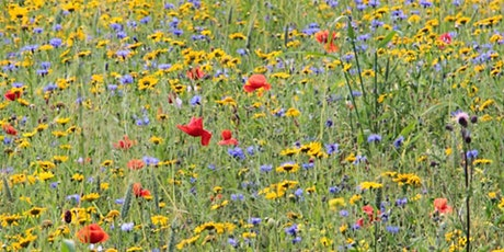 Farm tour with flower meadows, woodland and lake views tickets