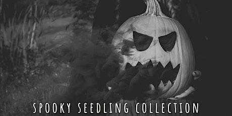 Just a Little Hocus Pocus: Spooky Seedling Collection Mini Sessions tickets