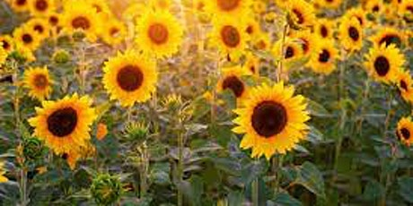 September Sunflowers with Music tickets