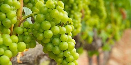 VINcabulary : Chardonnay tickets