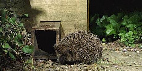 Homes for Hedgehogs - Conservation Workshop tickets