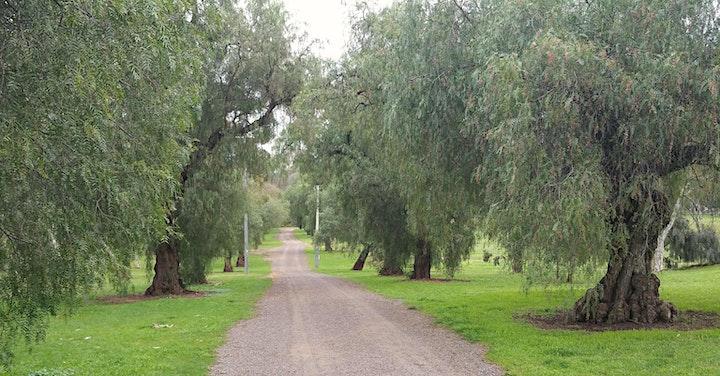 Guided walk through King Rodney Park / Ityamai-itpina (Park 15) image