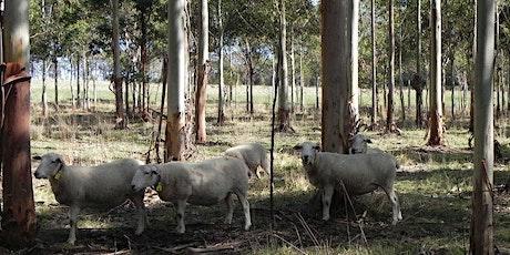 Local Farmers - Journey in Holistic Farming - Webinar 2 of 3 tickets