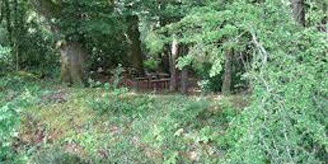 Sligo sangha: Forest Bathing (social distanced) limited to 12 people tickets