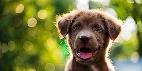 Webinar: Masterclass puppy coaching en opvoeding tickets