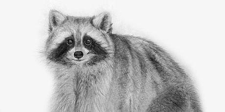 60min  Animal Sketching - Racoon @10AM (Ages 6+) tickets