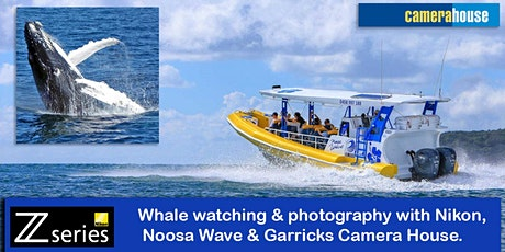 Photographing Whales with Nikon and Noosa Wave. tickets