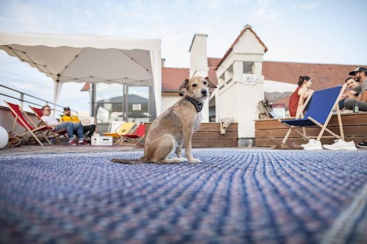 Sense - Rooftop LIVE auf der Dachterasse im Emma Pforzheim: Bild