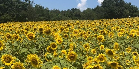 Sunflower Yoga at Hope Hill Lavender Farm tickets