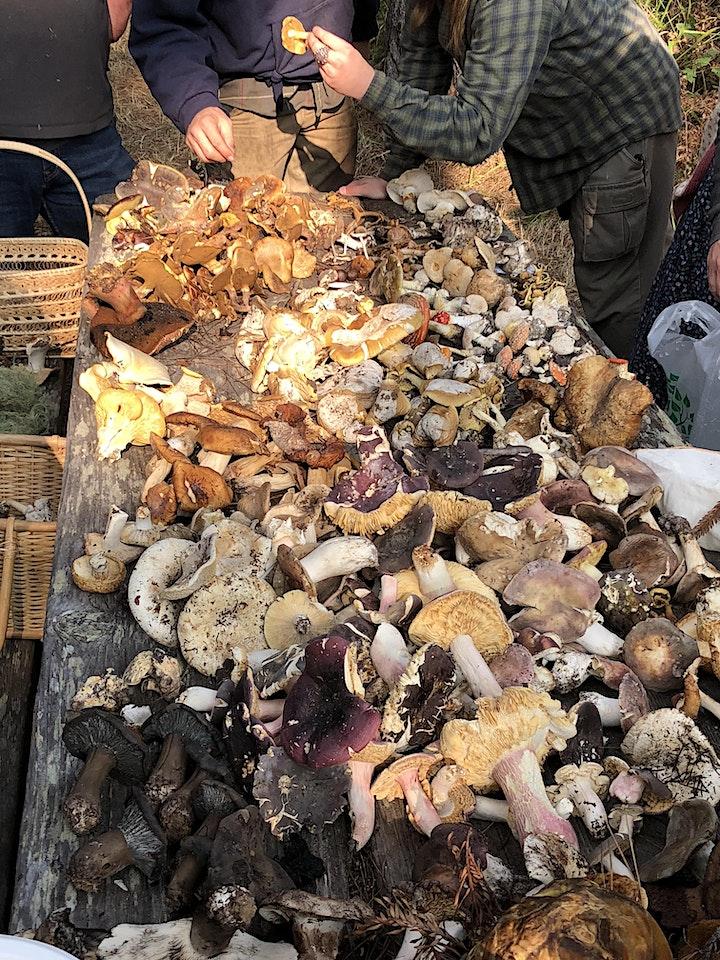 SOMA Wild Mushroom Foray at Salt Point State Park - Nov 20, 2021 image