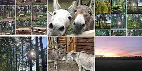 Fairytale Forest - Walk and Picnic with the Donkeys - Sep 2020 tickets