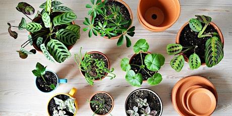 Apprenez à propager des plantes avec Maria + profitez d'un latté ou matcha! billets