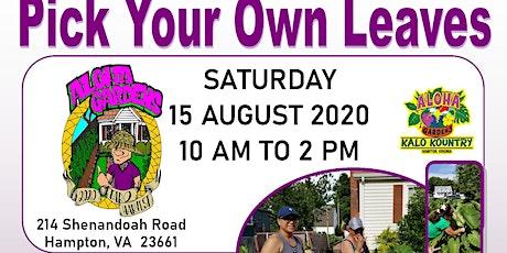 Aloha Gardens KALO GOLD Hampton, Virginia (Saturday, August 15, 2020) tickets