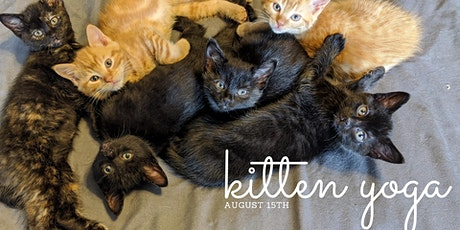 August 15th Kitten Yoga - Session 2 tickets