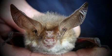 Meet the Neighours - Microbats explained! tickets