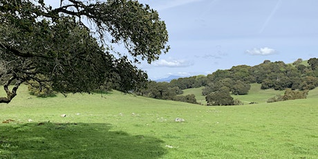 YogaHike Sonoma at Taylor Mountain Regional Park tickets