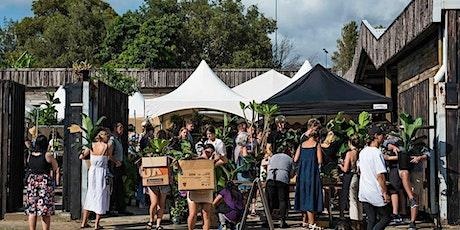 Perth - Treasure Hunt in the Jungle - Huge Online Indoor Plant Sale tickets