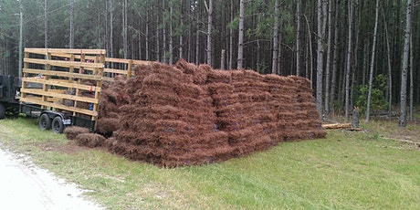Pine Straw Management Webinar Series tickets