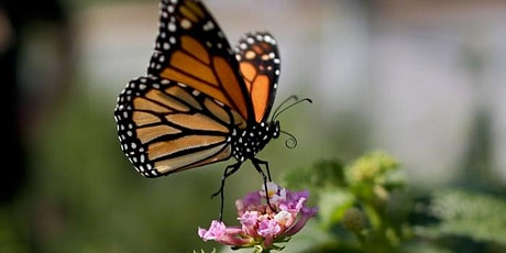 Outdoor Interpretive Hike - Flight of the Monarch Day tickets