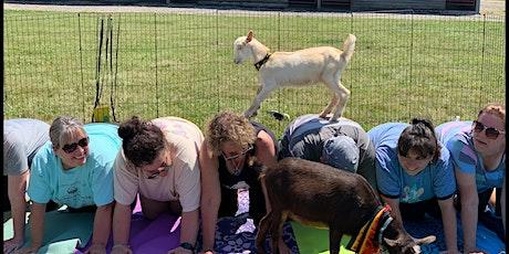 Goat Yoga! billets