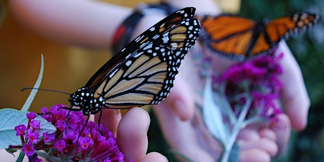 Spring holiday program: Labcoat Learning presents bees and butterflies tickets