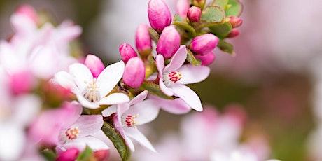 Randwick City Council Spring Wildflower Walk 2020 - Saturday Morning tickets