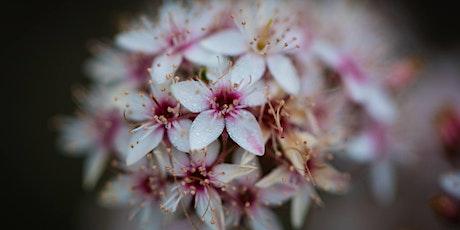 Randwick City Council Spring Wildflower Walk 2020 - Saturday Afternoon tickets