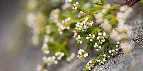 Randwick City Council Spring Wildflower Walk 2020 - Monday Morning tickets