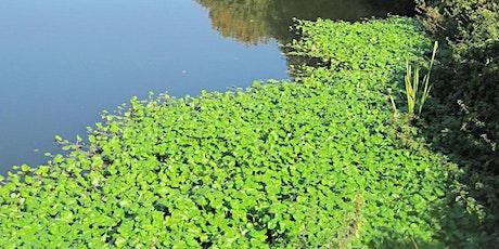 Beginnners - Invasive Non-Native Plants tickets