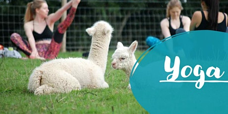 Alpaca Yoga tickets
