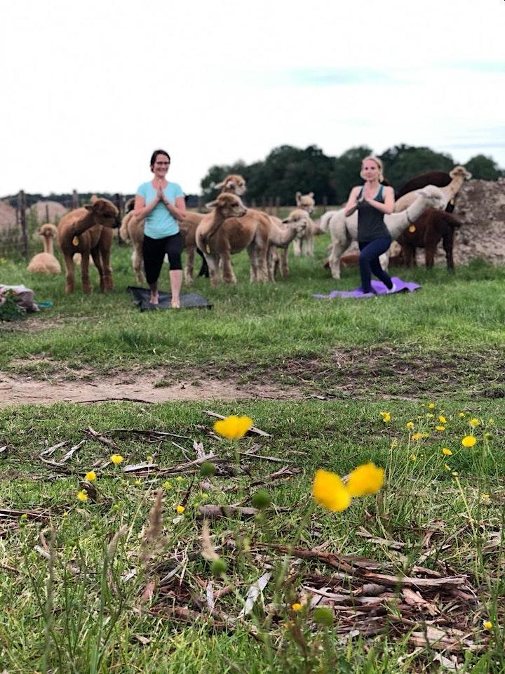 Afbeelding van Alpaca Yoga