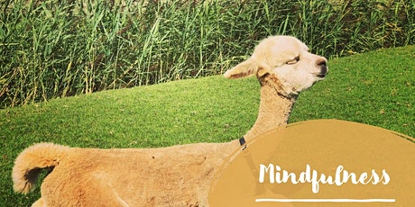 Alpaca Mindfulness tickets