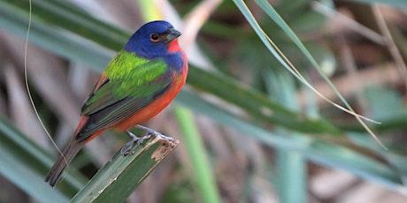 Earth Day 50: Backyards for Birds (webinar) tickets