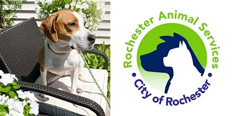 Volunteering with Rochester Animal Services tickets