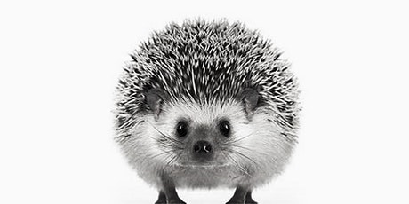 60min  Animal Sketching - Hedgehog @4PM (Ages 6+) tickets