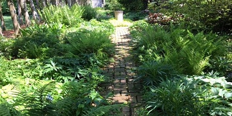 Plant Walk Series: Ferns and Fronds tickets