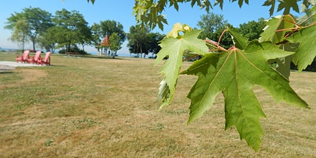 Maple Tree Walk: An Acer Chaser Adventure tickets