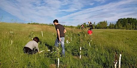 Downsview Park Community Stewardship - Invasive Species Busting tickets