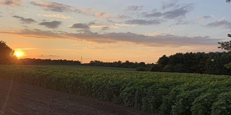 Sunflower field maze tickets