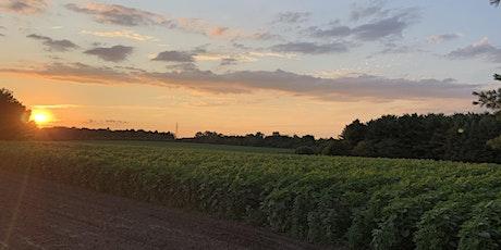 Sunflower field maze 8PM tickets