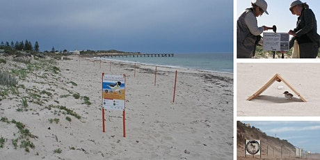 Hooded Plover Nest Protection tickets