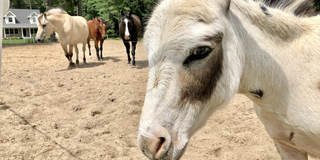 Meet & Greet With Our Horses & Mini-Donkey tickets