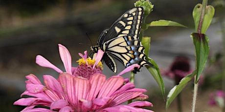 Creating Habitat for Pollinators tickets