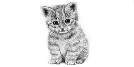 60min  Animal Sketching - Baby Kitten @10AM (Ages 6+) tickets