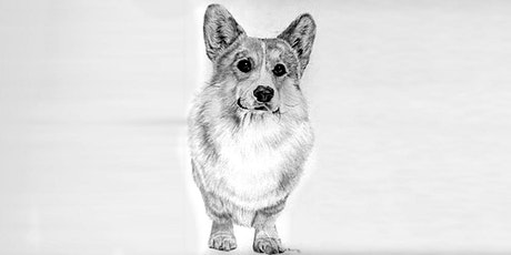 60min  Animal Sketching - Welsh Corgi @12PM (Ages 6+) tickets