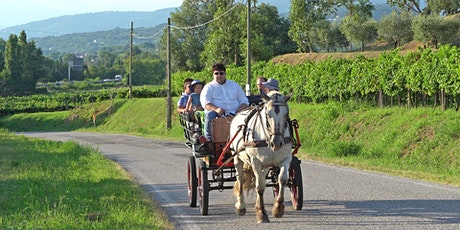 Horse Carriage Tour with Dinner and Wine Tasting tickets