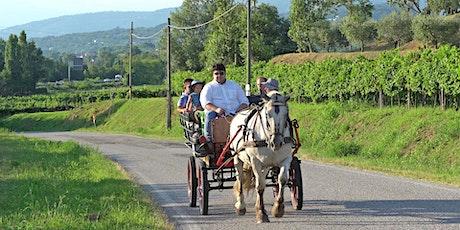 Tour in carrozza a cavallo con apericena e degustazione vini biglietti