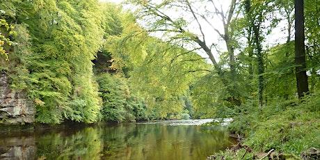Autumnal walk at Ayr Gorge Woodlands tickets
