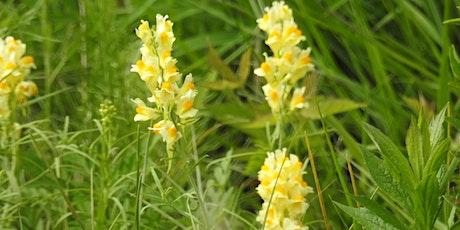 Ossining School Programs: Tree & wildflower identification at Rockefeller tickets